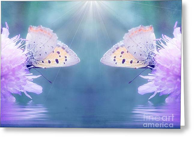Butterflies Greeting Cards - Duo butterfly Greeting Card by SK Pfphotography