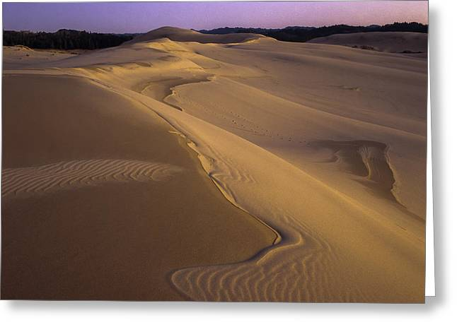 Oregon Dunes National Recreation Area Greeting Cards - Dusk Dune Patterns Greeting Card by Robert Potts