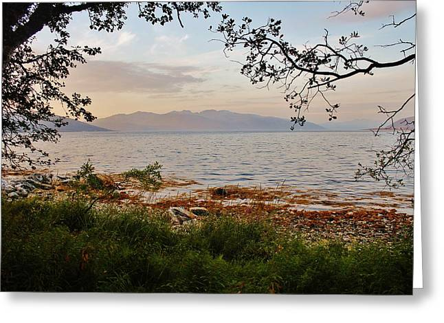 Norwegian Sunset Greeting Cards - Dusk Fjordland Forest Greeting Card by David Broome