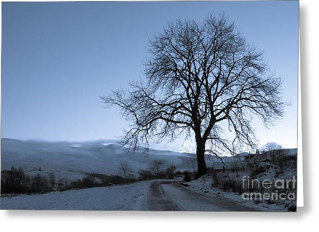 Winter Trees Greeting Cards - Dusk in Scottish Highlands Greeting Card by David Bleeker