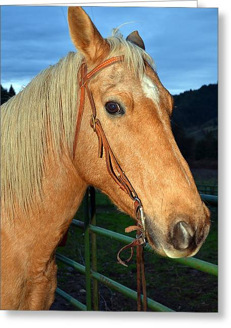Gelding Greeting Cards - Dusty a Gelding Greeting Card by Laura Mountainspring