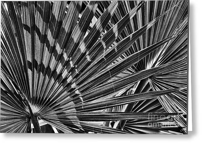 Frond Greeting Cards - Dwarf Palmetto Fronds Greeting Card by Tim Gainey