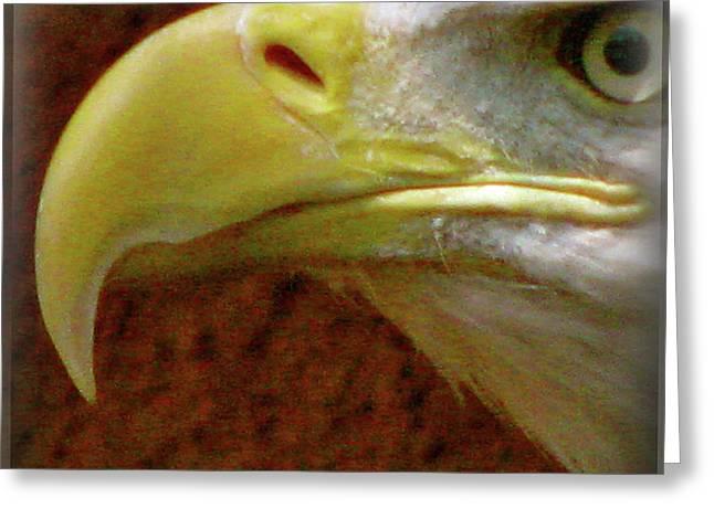 Flocks Of Birds Mixed Media Greeting Cards - Eagle Beak Power Greeting Card by Debra     Vatalaro