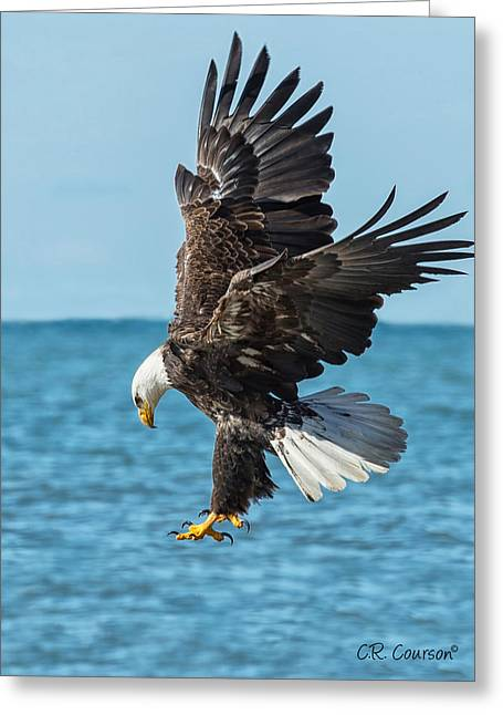 Eagle Dive Greeting Card by CR  Courson