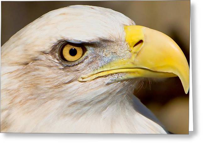 Symbol Of Power Greeting Cards - Eagle Eye Greeting Card by William Jobes