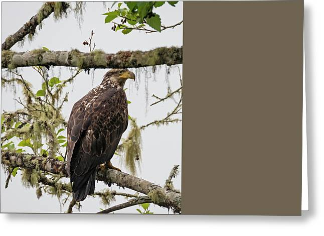 Eagle In The Fog Greeting Card by Loree Johnson