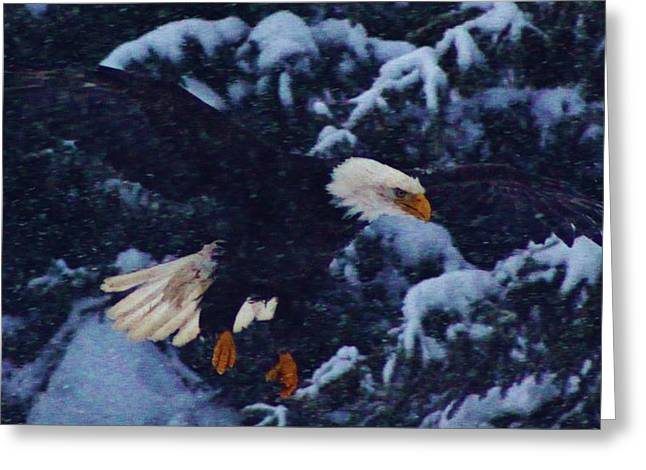 Eagles In Storms. Bald Eagles Greeting Cards - Eagle in the Storm Greeting Card by Lori Mahaffey