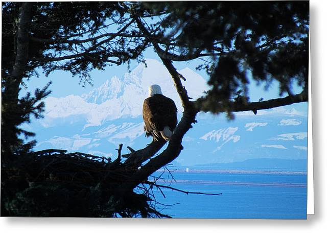 Pacific Northwest Greeting Cards - Eagle - Mt Baker - Eagles Nest Greeting Card by Marie Jamieson