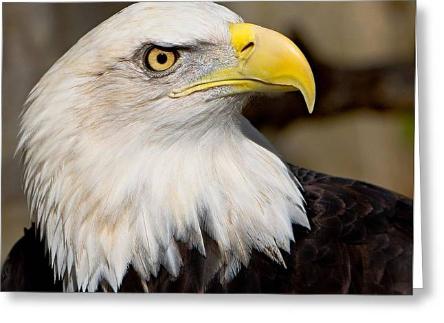 Symbol Of Power Greeting Cards - Eagle Power Greeting Card by William Jobes