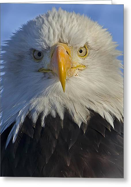 Alaska Greeting Cards Greeting Cards - Eagle protrait from front Greeting Card by Sasse Photo