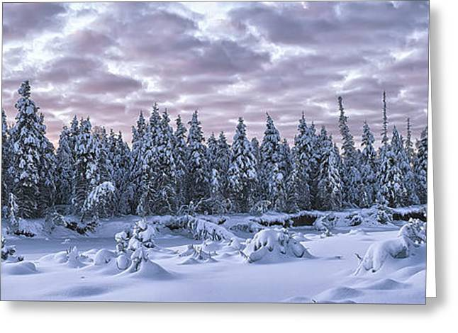 Snow Scene Landscape Greeting Cards - Eagle River Treeline Greeting Card by Ed Boudreau