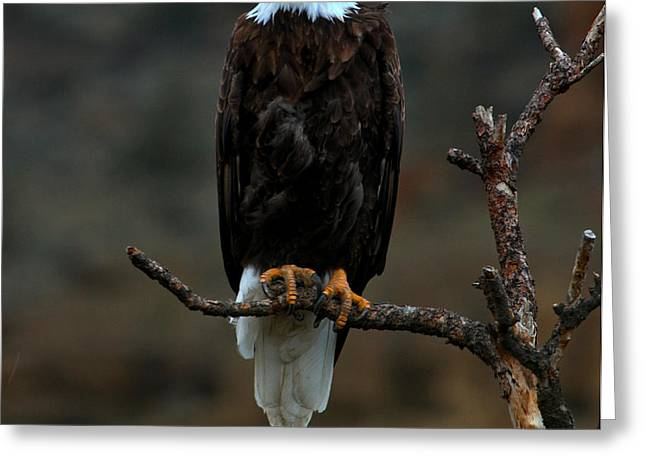 Eagle Scout Greeting Card by Adam Jewell