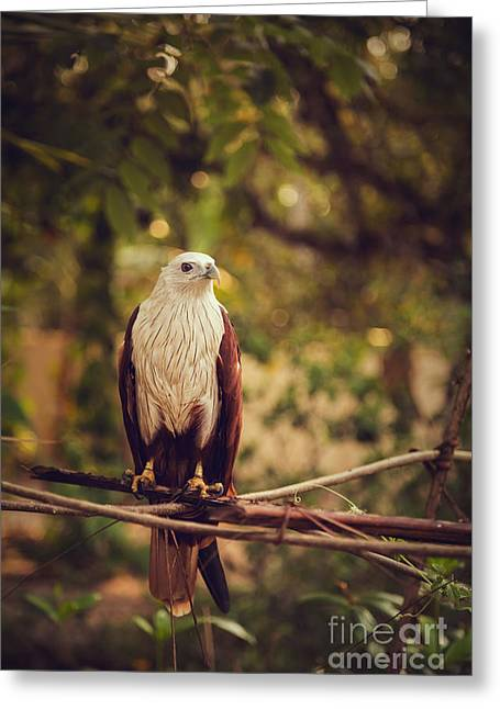 Kite Greeting Cards - Eagle Greeting Card by Sreenath S