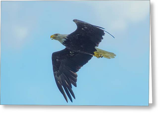 Pond In Park Greeting Cards - Eagle with Jordans Signature Tongue  Greeting Card by Jeff at JSJ Photography