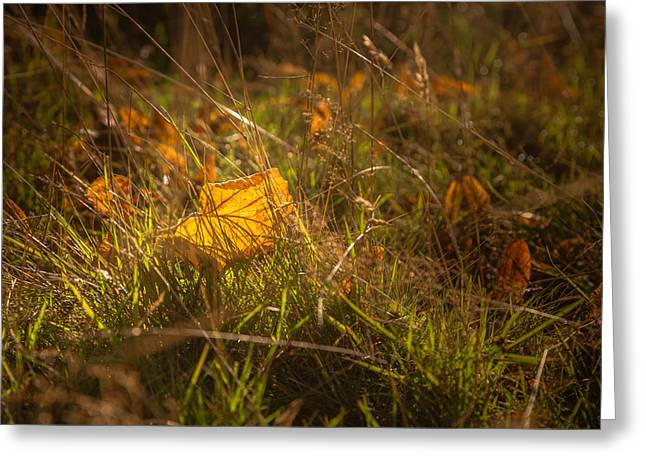 Early Autumn Leaf Fall Greeting Card by Chris Fletcher