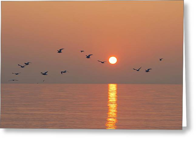 Westport Ct Greeting Cards - Early Birds Greeting Card by Stephanie McDowell