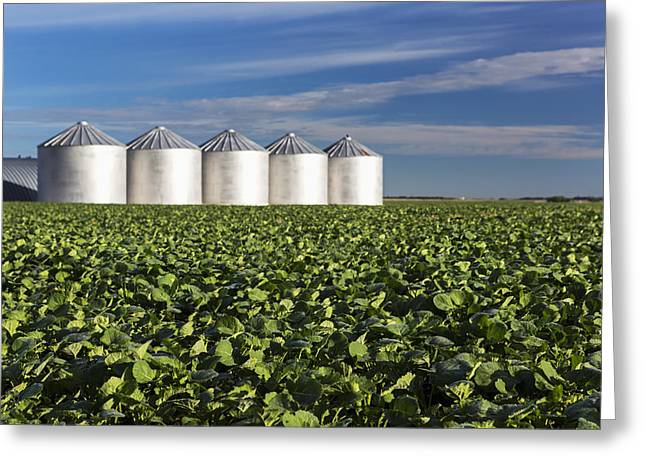 Grain Bin Greeting Cards - Early Canola Field With Clouds And Blue Greeting Card by Michael Interisano