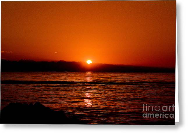 Enhanced Greeting Cards - Early Morning Call Greeting Card by Elmar Langle