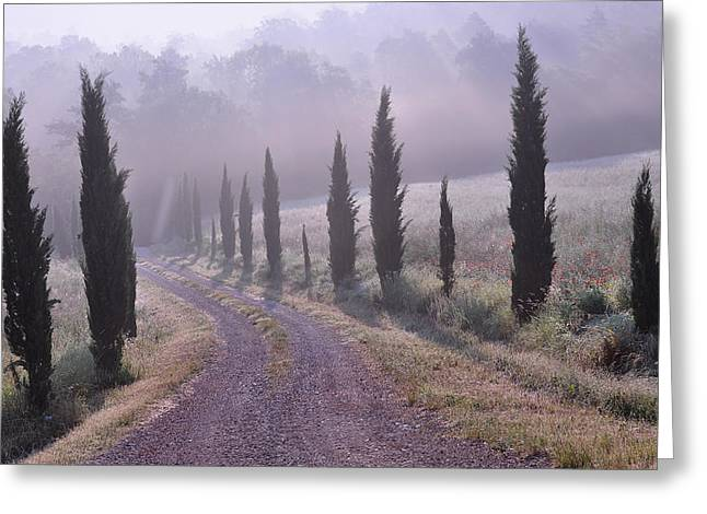 Misty. Greeting Cards - Early Morning Mist in Tuscany Greeting Card by Marion McCristall