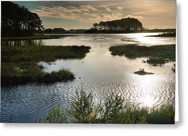Best Sellers -  - Wildlife Refuge. Greeting Cards - Early Morning On Beach Drive III Greeting Card by Steven Ainsworth