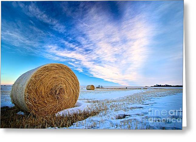 Hay Bales Greeting Cards - Prairie Winter Greeting Card by DJ MacIsaac