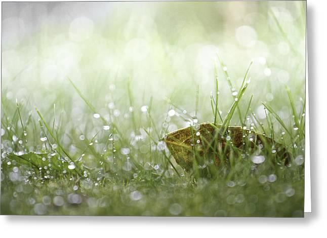 Raining Pyrography Greeting Cards - Early morning rain Greeting Card by Enrico Crobu