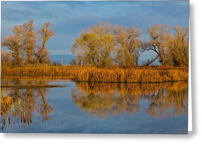 Willow Lake Greeting Cards - Early Morning Reflections Greeting Card by Kathleen Bishop