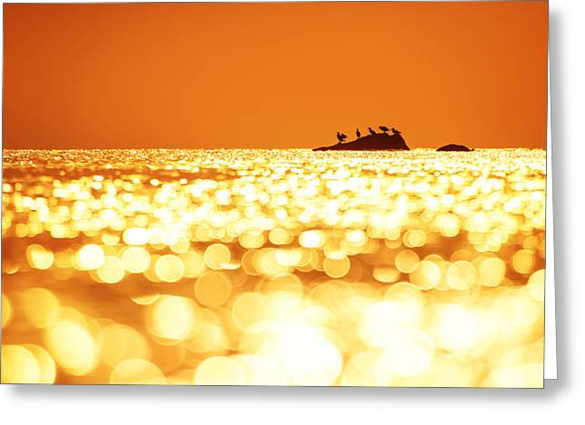 Seabirds Greeting Cards - Early morning sunrise over the sea Greeting Card by Valentin Valkov