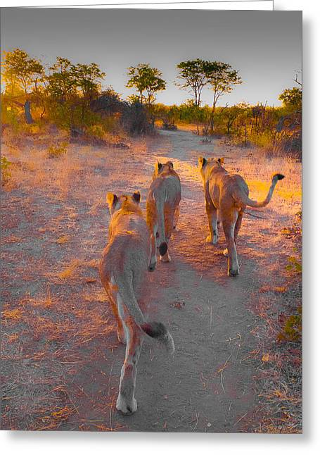 Nature Greeting Cards - Early morning walk Greeting Card by Julie Lovegrove