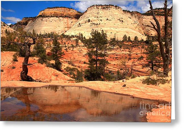 White Sandstone Greeting Cards - East Zion National Park Reflections Greeting Card by Adam Jewell