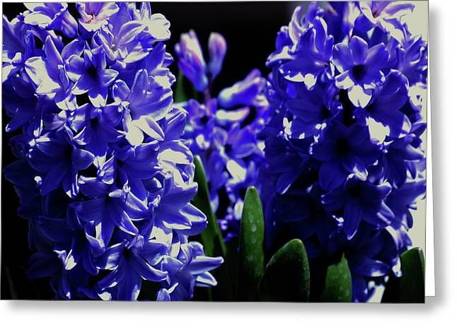 Easter Flowers Greeting Cards - Easter Blues Greeting Card by DigiArt Diaries by Vicky B Fuller
