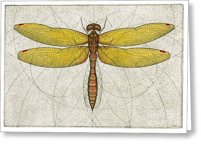 Dragonflies Mixed Media Greeting Cards - Eastern Amberwing Dragonfly Greeting Card by Charles Harden
