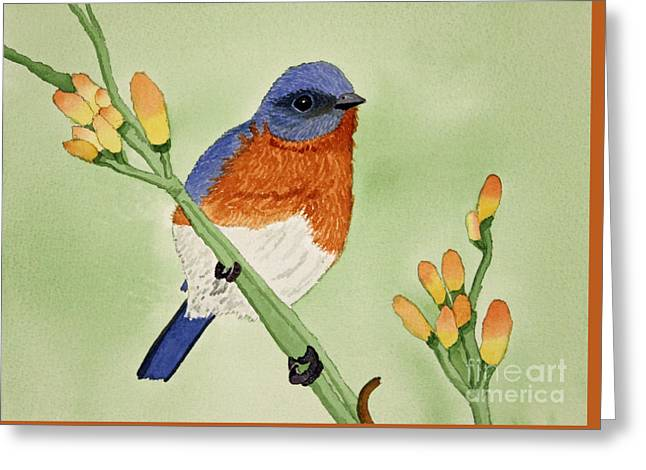 Appleton Paintings Greeting Cards - Eastern Bluebird Greeting Card by Norma Appleton