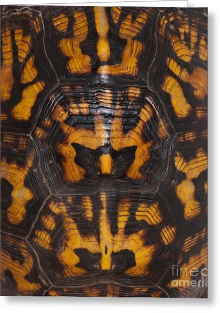 Eastern Box Turtle, Shell Pattern Greeting Card by Scott Camazine