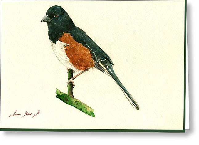 Small Bird Greeting Cards - Eastern Towhee bird Greeting Card by Juan  Bosco
