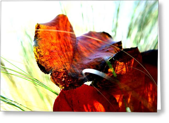 Fall Grass Greeting Cards - Easy Afternoon Greeting Card by Mark  Ross