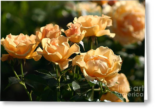 Easy Going Greeting Cards - Easy Going Rose Greeting Card by B Rossitto