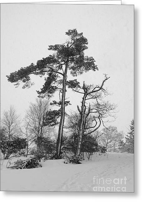 Eccentric Trees Greeting Card by Gunnar Braaten