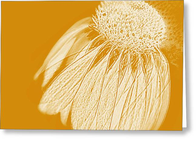 Echinacea Greeting Card by Linde Townsend