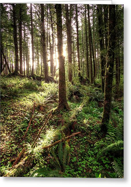 Ecola Point Forest Greeting Card by Patrick Groleau