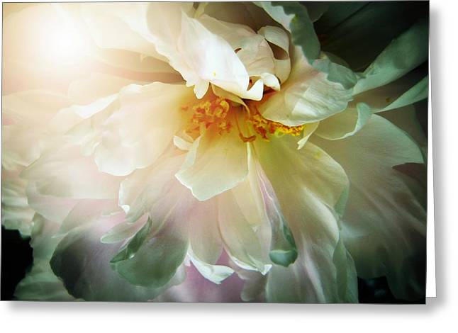 Light And Dark Greeting Cards - Ecstasy Greeting Card by Shirley Sirois