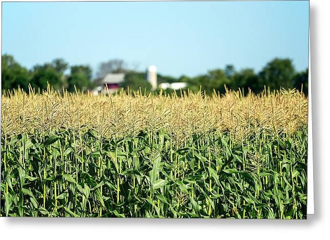 Edge Of Field Of Corn Greeting Card by Todd Klassy