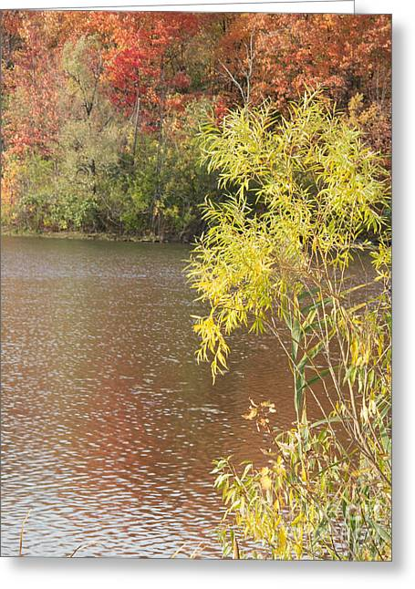 Greeting Cards - Edges of Autumn Greeting Card by Ann Horn