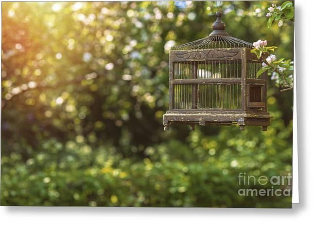 Edwardian Birdcage Greeting Card by Amanda Elwell