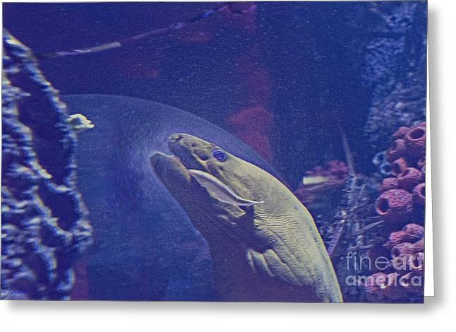 Aquarium Fish Greeting Cards - Eel Eats What Greeting Card by Linda Troski