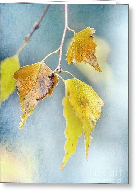 Effeuillantine - 14ct11a Greeting Card by Variance Collections