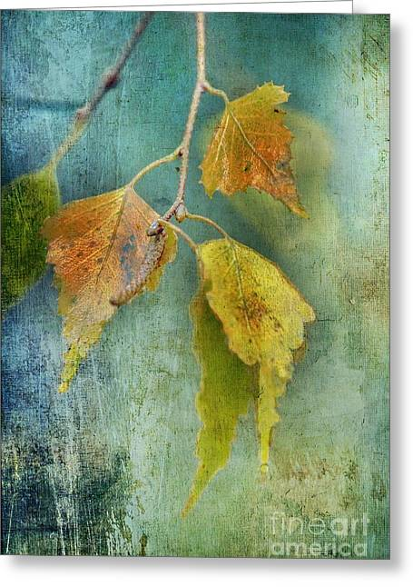 Effeuillantine - 15t12 Greeting Card by Variance Collections