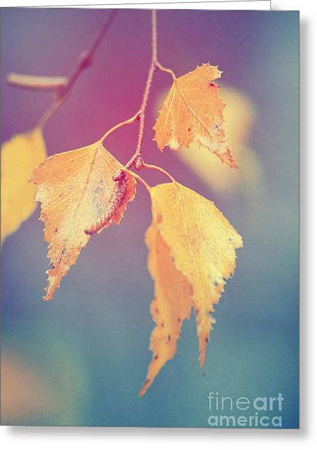 Effeuillantine - 17a Greeting Card by Variance Collections