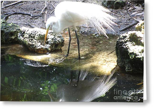 Beach Photography Greeting Cards - Egret And Self Greeting Card by Sharon Nelson-Bianco