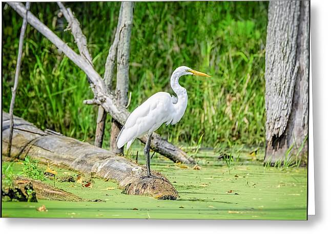Snowy Day Greeting Cards - Egret at Seven Ponds Greeting Card by LeeAnn McLaneGoetz McLaneGoetzStudioLLCcom